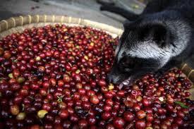 Civet2